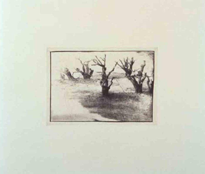 davidlynch-untitled-iii-1-800x800